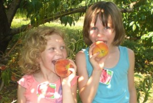 Flinchbaugh's Orchard & Farm Market kids eating our tasty peaches!