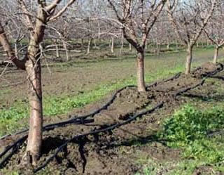 Flinchbaugh-Drip Irrigation