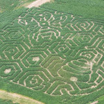 "Flinchbaugh's Orchard & Farm Market's 2014 Corn Maze ""What's The Buzz About"""