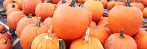 Flinchbaugh's Orchard & Farm Market Pumpkins