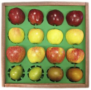 Flinchbaugh's Orchard and Farm Market's Large Fruit Box